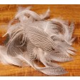 Pintail Flank Feathers