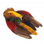 Golden Pheasant Skin No Tail