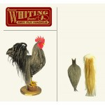 Whiting Farms Rooster Soft Hackle with Chickabou