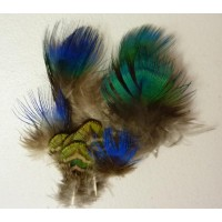Peacock Body Feathers